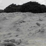 clip image0039 150x150 La tortue nida