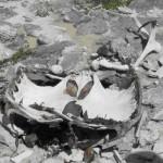 clip image0046 150x150 La tortue nida