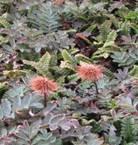 clip image0052 Invasion (2/2) : Les mauvaises herbes