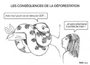 deforestation maladie 300x216 Maladies infectieuses : l'effet protecteur des forêts intactes
